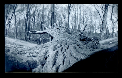 I sat on the tree that had fallen in the woods and pointed the camera towards the roots. Exposure 2 minutes.